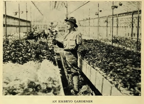 Man with one arm working in a greenhouse.